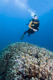 Diver over coral Stock Photography