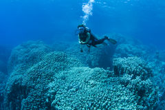 Diver over Coral reef Stock Photos