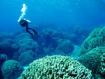 Diver over coral reef Royalty Free Stock Photo