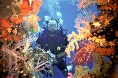 Diver Peers Through Soft Coral on Fujikawa Maru Stock Photo