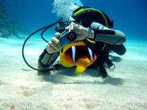 Diver photographer with anemon fish Royalty Free Stock Photos