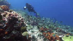 Diver on the reef among schools of colorful fish. stock video