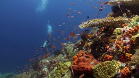 Diver on the reef among schools of colorful fish. stock footage