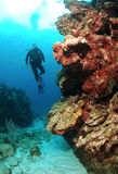 Diver on reef wall. Stock Images