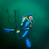 Diver in the river Royalty Free Stock Photos