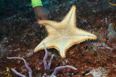 Diver's Hand Pointing to a Sea Star Stock Images