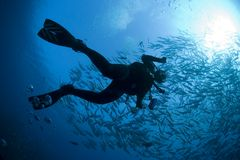 Diver's Silhouette. Silhouette of a diver taken underwater from below.  Diver is surrounding by a large group of fish Royalty Free Stock Image