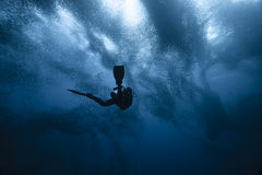 Diver and sardines run royalty free stock photography