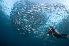 Diver with a school of Jacks Royalty Free Stock Image