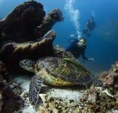 Diver. Scuba divers exploring coral reef with abundance of marine life Stock Photos
