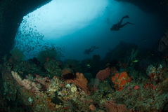Diver, sea fan in Ambon, Maluku, Indonesia underwater photo Stock Images