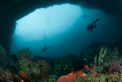 Diver, sea fan in Ambon, Maluku, Indonesia underwater photo Stock Photos