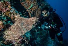 Diver and sea fan Gorgonia in Derawan, Kalimantan, Indonesia underwater photo Stock Image