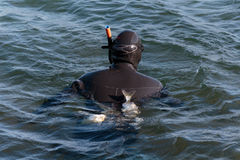 Diver in the sea. With fish tucked under the belt stock image