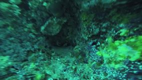 Diver shoot little fish at coral reef underwater. Beautiful ocean wildlife. Depth. Scuba dive stock footage