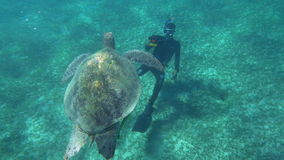 Diver Shooting a Big Sea Turtle stock video