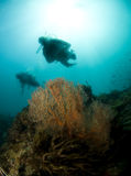 Diver sillouette. Scuba divers swimming over red sea fan Royalty Free Stock Photos