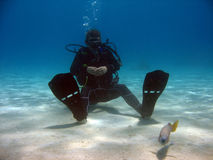 Diver sitting on sand. Looking at a fish. the sea here has a nice color and the diver is in nice contrast to the sea stock images
