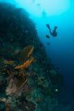 Diver, sponge in Ambon, Maluku, Indonesia underwater photo Stock Photo