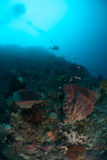Diver, sponge in Ambon, Maluku, Indonesia underwater photo Royalty Free Stock Photo