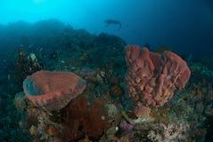 Diver, sponge in Ambon, Maluku, Indonesia underwater photo Stock Photography