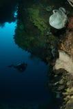 Diver, sponge, coral reef in Ambon, Maluku, Indonesia underwater photo Royalty Free Stock Image