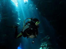 Diver in a sunlit cavern. Diver in a sunlint cavern in Red Sea, Egypt stock photos