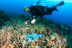 Diver swimming over a discarded plastic bag on a reef. A SCUBA diver swims over a discarded plastic bag tangled on a coral reef stock images