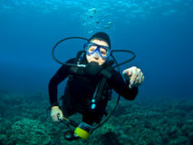 Diver swimming over a Reef in Kona Hawaii Stock Photos