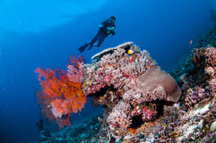 Diver swimming, sea fan Anella mollis in Gili, Lombok, Nusa Tenggara Barat, Indonesia underwater photo Stock Photos