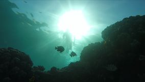 Diver swims over a coral reef in the sun light. Diver swims over a beautiful coral reef in the sun light stock video