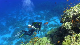 Diver swims over coral reefs stock video