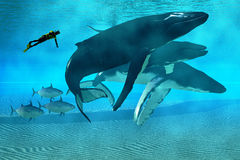 Humpback Dive. A diver swims with a pod of Humpback whales as three tuna cruise by Royalty Free Stock Photos