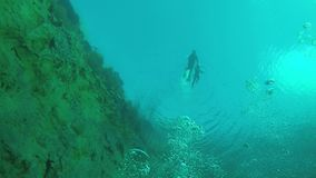The diver swims under water. In the lake stock video
