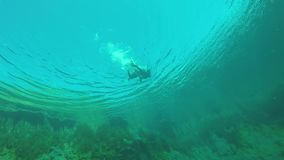 The diver swims under water. In the lake stock video footage