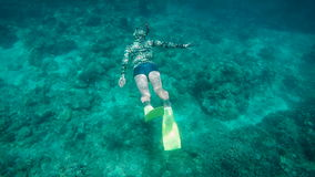 Diver swims under water on the ocean floor and then rises to the surface to breathe air. Tourist engaged diving near a stock footage