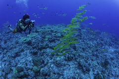 Diver take photo school Bluestripe snapper Royalty Free Stock Photos