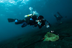 Diver take a photo video upon coral lembeh indonesia scuba diving Royalty Free Stock Photography