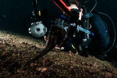 Diver take photo video seahorse lembeh indonesia scuba diving royalty free stock image