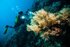 Diver take a video upon coral kapoposang indonesia scuba diving Royalty Free Stock Photography