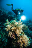 Diver take a video upon coral kapoposang indonesia scuba diving Stock Image