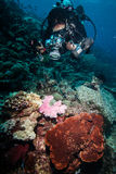 Diver taking picture of coral reefs in Derawan, Kalimantan, Indonesia underwater photo Royalty Free Stock Images
