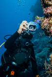 Diver taking picture of tunicates in Derawan, Kalimantan, Indonesia underwater photo Royalty Free Stock Photography