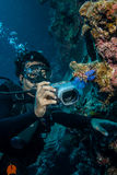 Diver taking picture of tunicates in Derawan, Kalimantan, Indonesia underwater photo Royalty Free Stock Images