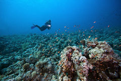 Diver and tropical reef stock photo