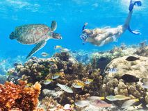 Diver and turtle Royalty Free Stock Image