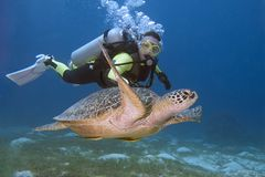 Diver and turtle. Swimming in Bohol sea stock photo