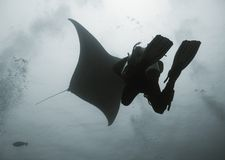 Diver under manta Royalty Free Stock Images