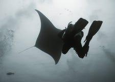 Diver under manta. Diving on Maldives Royalty Free Stock Images