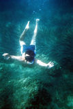 Diver under the sea-grain is visible, film scan. Diver under the sea with sea grass stock image
